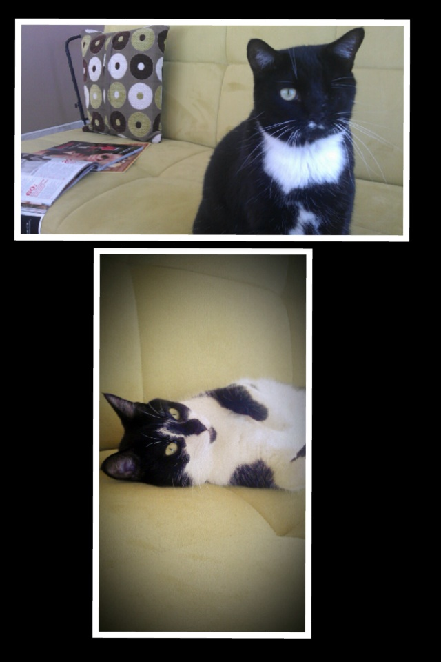 Please help me find a new home for Moon Pie and Patch!!